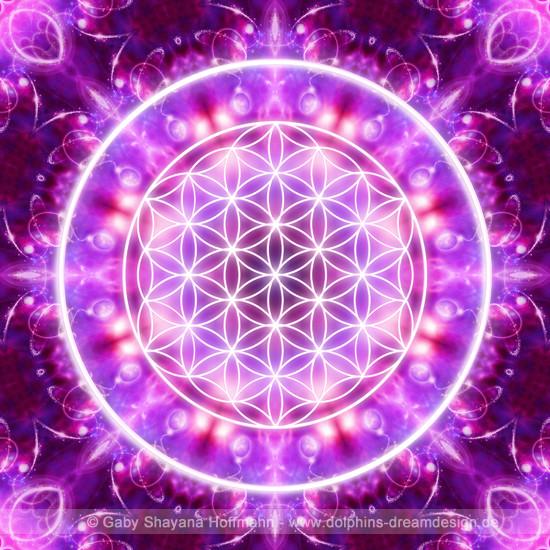 Blume des Lebens - Transformation