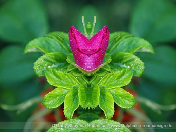 Blüten Königin